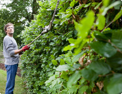 Hedge Trimming from Top Gardening Services
