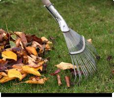 garden_cleaning