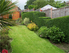 Garden from Top Gardening Services